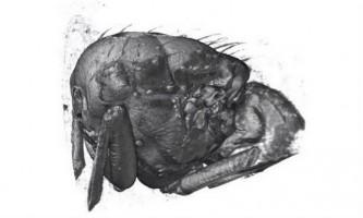 Рентгенівська 3d-зйомка розкрила руху м`язів комах в польоті
