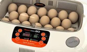 Режими і стадії інкубації курячих яєць