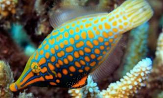 Рифові рибки маскуються від хижаків за допомогою запахів
