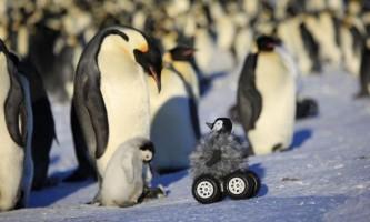 Робот допоможе вченим шпигувати за соромиться пінгвінами
