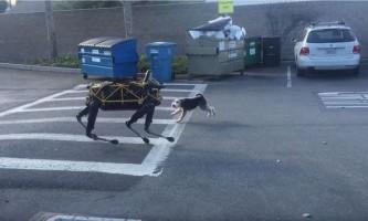 Робот-собака побилася з живим псом