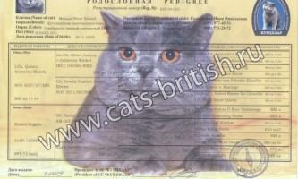 Родовід кішки (кота)