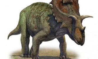 Рогаті динозаври: цератопси