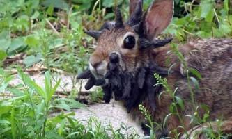 Рогата кролик розбурхав користувачів інтернету