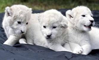 Ростовський зоопарк отримав рідкісний подарунок
