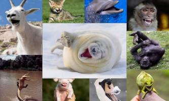 Рожеві тварини: «гламурність» від природи