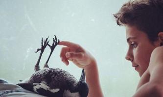 Ручна сорока на прізвисько пінгвін - справжній домашній улюбленець