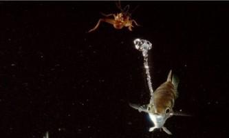 Риба бризгун: снайпер підводного світу