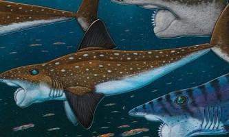 Риба з зубами, як у циркулярної пилки, зовсім не акула