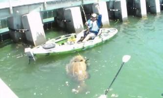 Рибак зловив на вудку 250-кілограмового окуня