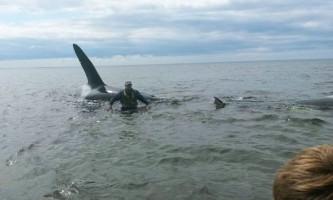 Рибалки з москальво врятували косаток