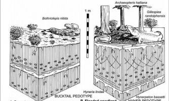 Риб`ячі плавники стали лапами, щоб було чим розгрібати підводний сміття