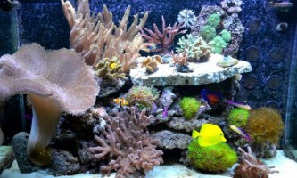 Рибки для морських акваріумів