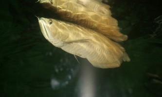 Риби і ссавці жують по-різному
