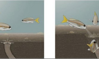 Риби здатні спільно залякувати хижаків, з`ясували біологи