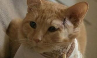 Рудий кіт врятував хлопчика від випадкової кулі