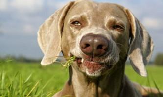 З наукової точки зору собаки краще кішок