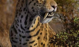 Шаблезубий тигр - древній представник котячих хижаків