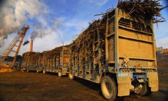 У бразилии побудують найбільший в світі завод з виробництва пластика з цукрової тростини