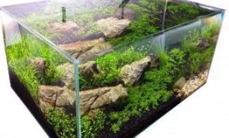 Сайдекс для акваріума