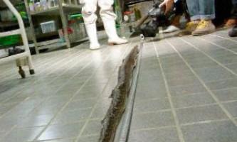 Найдовша в світі отруйна змія хабу