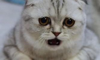 Найсумніша кішка в світі стала зіркою instagram