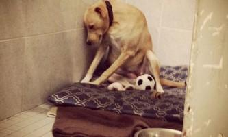 Найсумніша в світі собака шукає сім`ю