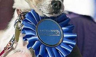Найпотворніший собака в світі-2010