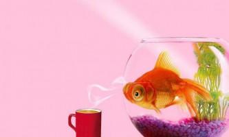 Найцікавіше про акваріумних рибок