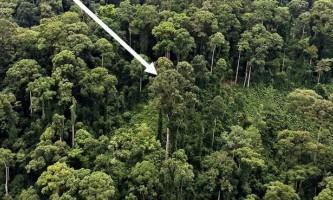 Найвища тропічне дерево виявлено в малайзії
