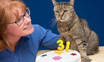 Найстарішому коту в світі виповнився 31 рік