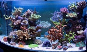 Найбільші акваріуми в світі