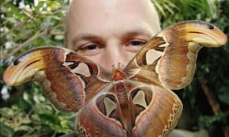 Найбільші комахи планети земля