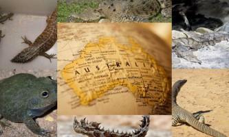 Тваринний та рослинний світ австралії