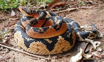 Найбільші змії в світі: фото гігантських рептилій, що вселяють жах