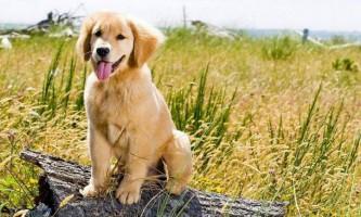 Найдобріші собаки в світі: хто вони?