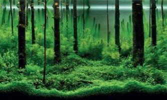 Найкрасивіші акваріуми (iaplc 2010)