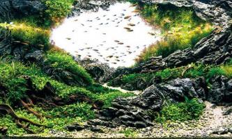 Найкрасивіші акваріуми світу за версією iaplc