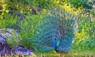 Найкрасивіші птиці світу