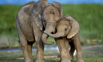 Найкращі матері тваринного світу