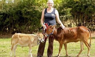 Найменші корови підкорюють серця англійців