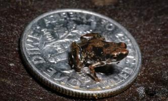 Найменші тварини нашої планети