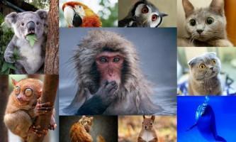 Самі незвичайні тварини світу: екзотична фауна у всій красі