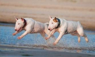Найнепривабливіші породи собак