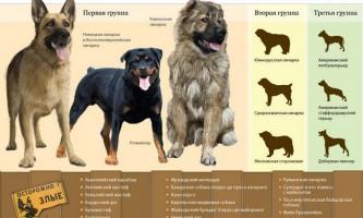 Найнебезпечніші для людини породи собак