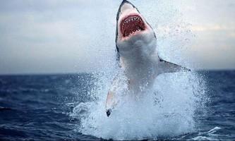 Найнебезпечніші для людини види акул