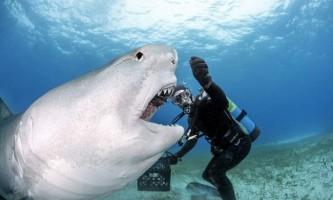 Найнебезпечніші і дивовижні фото: акули і інші мешканці моря в об`єктиві даніеля ботельо