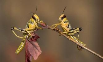 Найпоширеніші комахи - шкідники полів