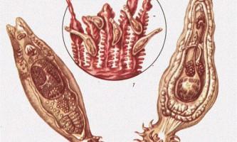 Найпоширеніші захворювання риб (частина 3)