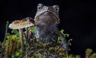 Найбільш рідкісні і красиві жаби